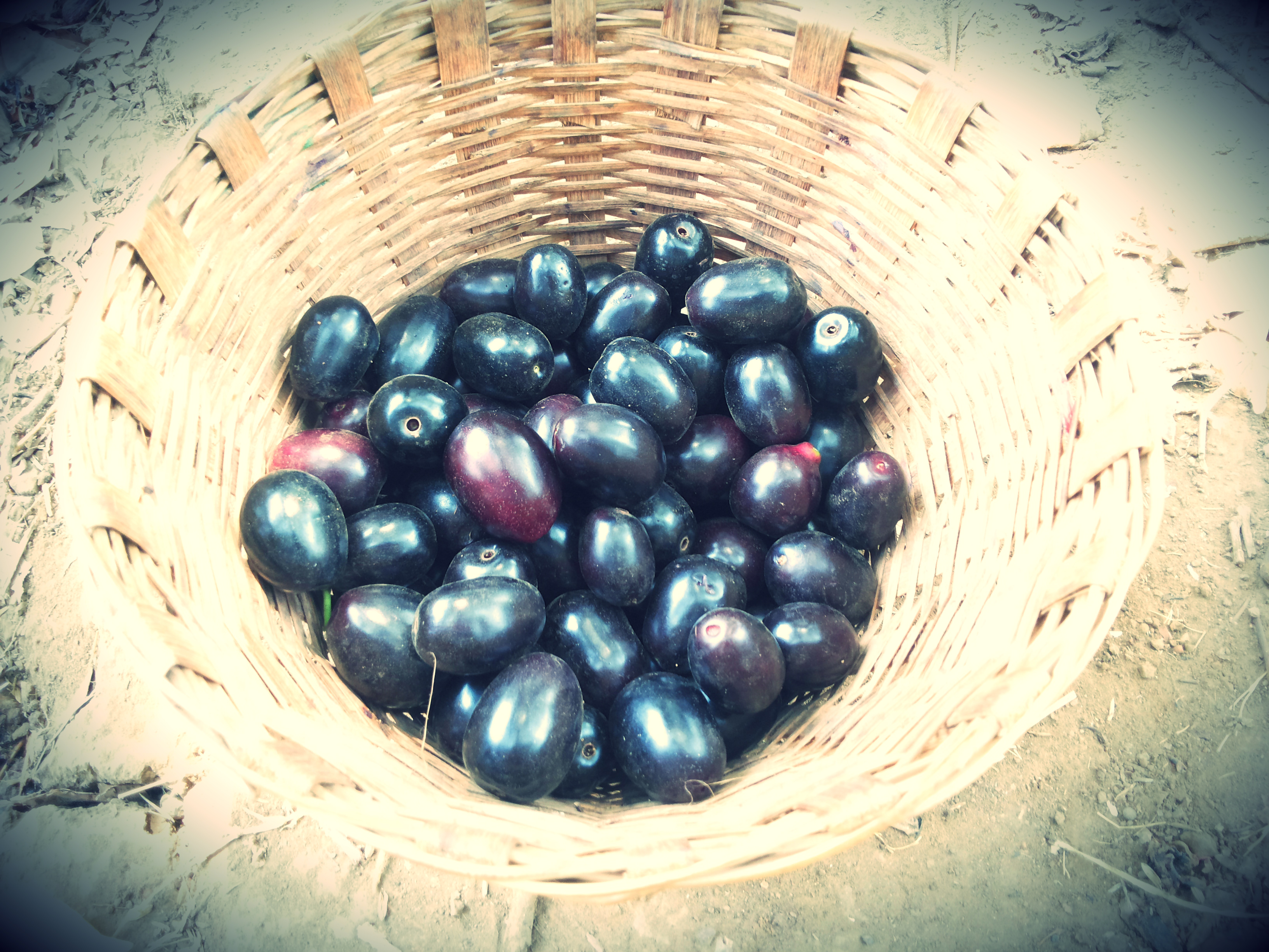Evergreen Jamuns