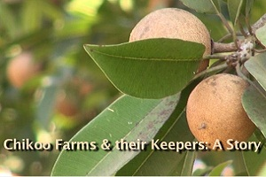 Chikoo Farms & Their Keepers